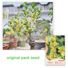 4 Seeds / Pack, Sweet Osmanthus Seed,DIY Potted Plants Bonsai Trees Osmanthus Flower Seed