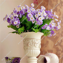 Balcony Pot Plants Campanula Seeds China Herb Bonsai Perennial Beautiful Flower Garden Flower Seeds Bellflower Seed 100 Pcs/ Bag(China)