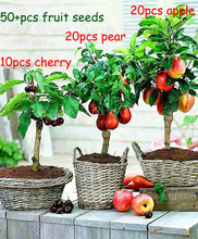 3 kind fruit, bonsai fruit tree seeds, vegetable and fruit seeds cherry apple pear total 50+ seeds Non-GMO plant home garden