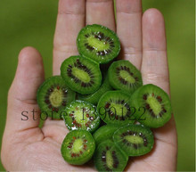 200pcs rare germany mini kiwi fruit seeds Non-GMO fruit and vegetable seeds for home garden can eat grow fast