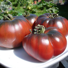 BELLFARM Heirloom Giant Black Krim Tomato Hybrid F2 Vegetables, 100 seeds, super sweet fruits E3835