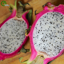 Bonsai tree Red Dwarf Dragon Fruit Pitaya seeds  garden decoration plant  20pcs A90