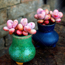200pcsThe peach blossom egg Stones Succulent Cactus DIY Home bonsai Ornamental indoor Plant for home garden(China)