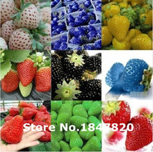 GGG 100pcs  New Rare 10 Colors Super Sweet Giant Strawberry Seeds Potted flowers Berry Seeds fruit seed