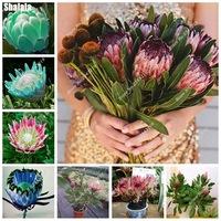 Happy-Farm-Cynaroides-Seeds-Aerobic-Potted-Wedding-Decoration-New-Variety-Light-up-Your-Garden-100-Pcs.jpg_200x200