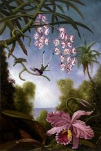 Orchids and Spray Orchids with Hummingbird, 1890 by Martin Johnson Heade Flower Painting for Living Room Still Life Hand Painted