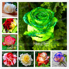 Hot Sale! Rare Mixed 100 rose flower seeds Strong beautiful Fragrant Garden Rose Flower bonsai plant seeds easy to plant(China)