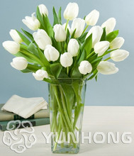 5 pcs / lot  Mini White Tulip Bulbs Bulbous Root Flowers Balcony Potted Perennial Flowers It is Bulb (Not Tulip Seeds)