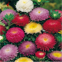 Dwarf aster seeds Callistephus chinensis Mixed color Rare bonsai flowe seed Outdoor plant seeds for Home garden100pcs/bag
