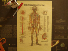 Wall Stickers Vintage Medical Use Of The Human Nervous System Diagram Students Collect Weird Paper Poster Core Room Decoration(China)