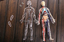 "4D master vision 13"" TRANSPARENT HUMAN BODY funny ANATOMY MODEL medical skeleton anatomical model Science Educational Toys(China)"