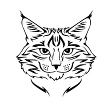 14*15CM Maine Coon Cat Breed Kitten Pet Animal Vinyl Decal Classic Cartoon Window Decoration Car Sticker C4-0592