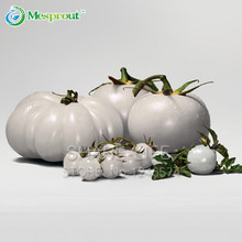 Rare WHITE Tomato Seeds Very Tasty Nutritive Heath Vegetables Seeds 100PCS Heirloom Tomato Seeds(China)