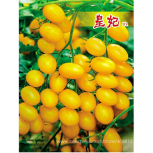Rare 'Imperial concubine' F1 Yellow Cherry Tomato 20 Seeds