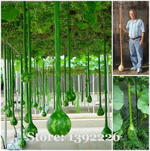 free shipping Long melon seeds, use as a container,bottles, or musical instruments, pumpkin seeds - 10 pcs/bag(China)
