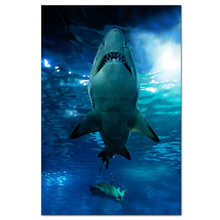 1 Panel HD Printed Shark & Fish Underwater Landscape Canvas Photo Prints BLue Sea Wall Picture Home Decor/SJMT1893(China)