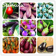 Cheap 200 pcs Organic heirloom eggplant vegetable seeds healthy and high nutritious vegetable seeds diy home garden plants