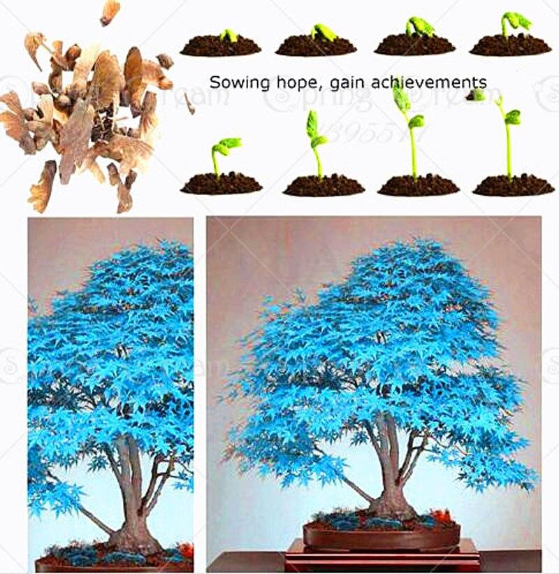 Как сажать семена деревьев 750