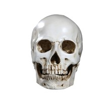 1Pc Resin Skull Statue Figurine Human Shaped Skeleton Head Halloween Decor Hot Sale(China)