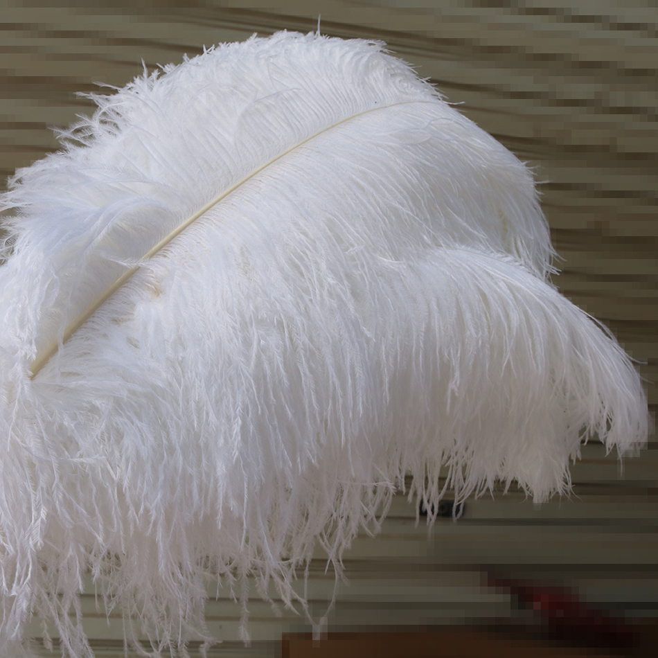 ostrich feather 3