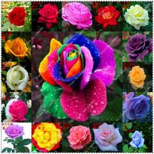 200pcs/bag Rose Seeds OWNER JUST WANTED TO WIN GOOD REPUTATION MULTI-COLOR RAINBOW ROSE flower seeds,bonsai plant home garden
