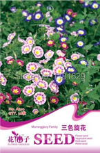 (Mix minimum order $5)1 original pack 30 Convolvulus / Tricolor Bindweed Flower Seeds, Mixed Colors free shipping