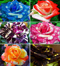 200pcs/bag rare mixed colours rose seeds rainbow rose seeds bonsai flower seeds black rose rare balcony plant for home garden