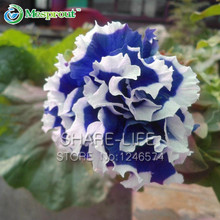 100 PCS Petunia Petals Blue With White Side Garden Home Bonsai Balcony Flower Petunia Flower Seeds