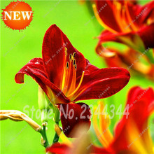 Special Offer Direct Selling Sementes Hybrid Mix Daylily Flowers Seed, Rare Unique Hemerocallis Seeds 150 pcs