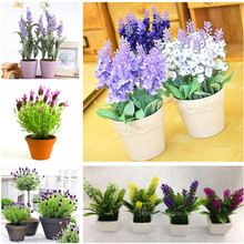 Hot 100Pcs French Provence Lavender Seeds Very Fragrant Can Grow Well In Bonsai Organic Lavender Seeds Plant Home Garden Bonsai(China)