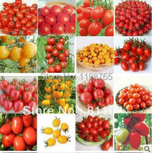100pcs TOMATO SEEDS Cherry Peach Pear Tomato seed Purple Black Red Yellow Green Non-GM Organic Food Bonsai p