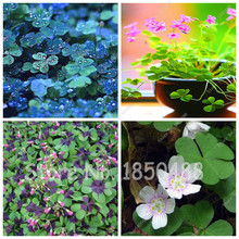 Hear-shaped Gras Seeds Day Four Leaf Clover Grow Your Own For Lucky Grass Seeds For Jardin Watch New Flower Pot Planters 100/bag