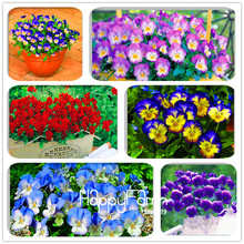 Genuine! 100 PCS Pansy (Viola cornuta) seeds rare indoor flower seeds in bonsai for home garden plants flowers(China)