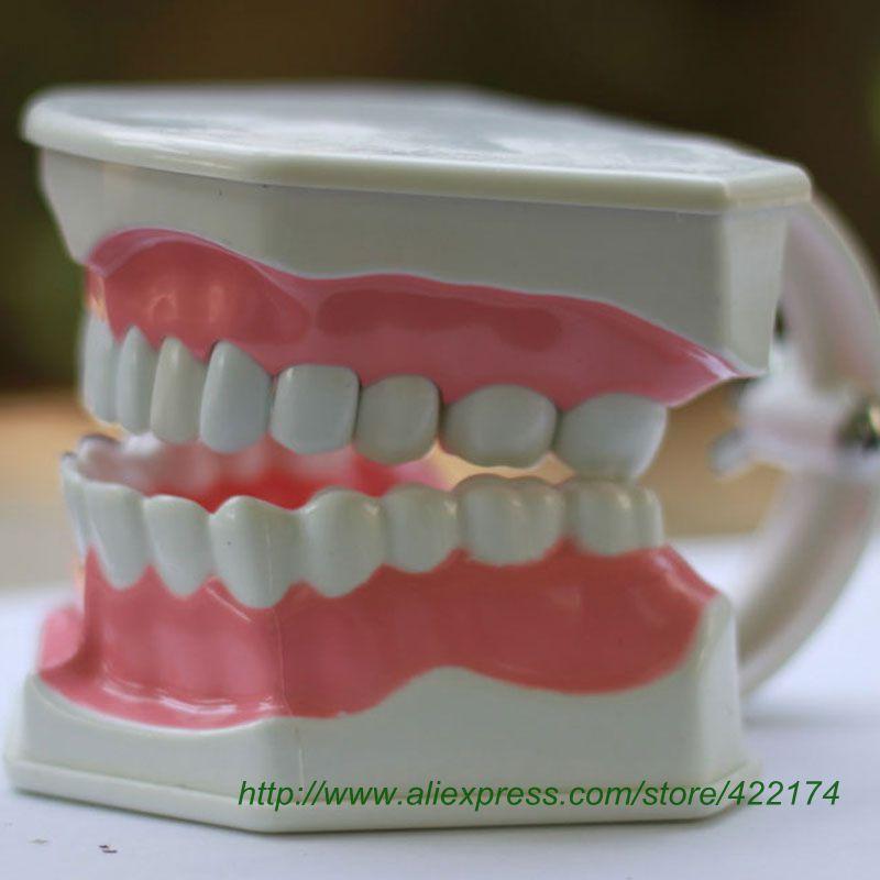 Free shipping Dental Teaching Model Study Model for children to learn brushing odontologia model human teeth model<br>