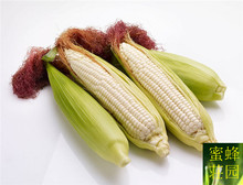 Hot fruit corn white corn seed white fragrant sweet waxy white corn about 20 seeds(China)