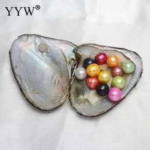 Vacuum-pack Freshwater Oyster Wish Pearls with Shell Multiple Color 10-11mm Round Pearl Beads  For Jewelry Making DIY Necklaces