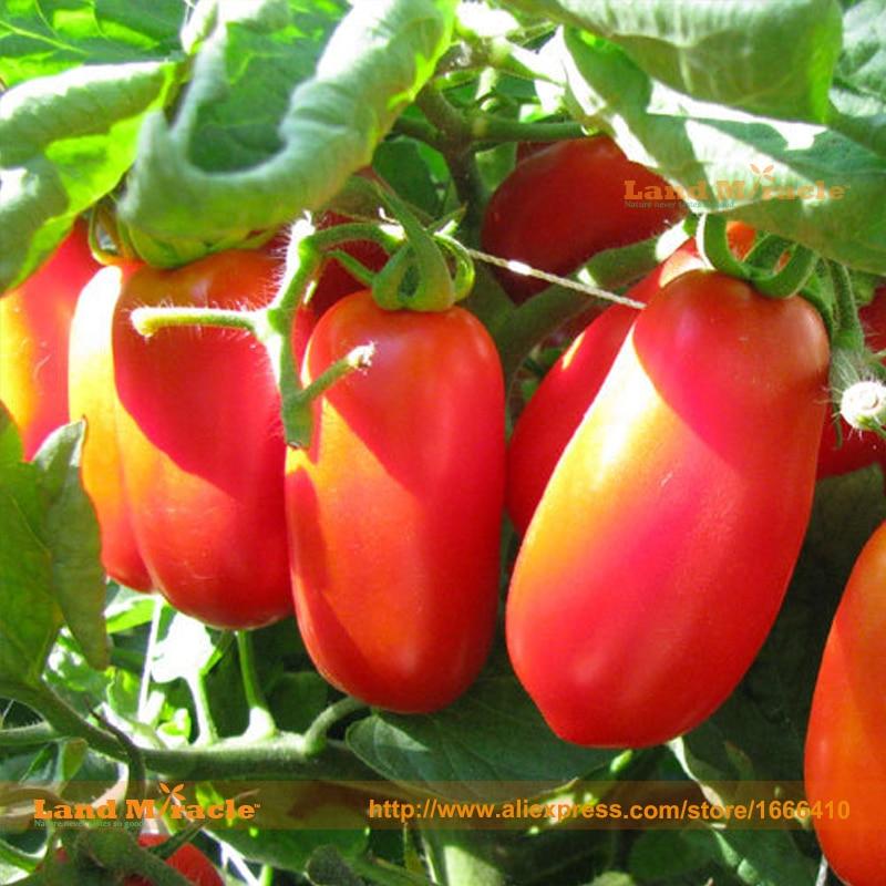 online kaufen gro handel roma tomaten aus china roma. Black Bedroom Furniture Sets. Home Design Ideas