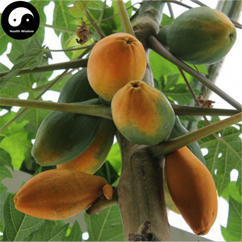 Buy Pawpaw Fruit Tree Seeds 60pcs Plant Chinese Flowering Quince Grow Papaya Chaenomeles Sinensis(China (Mainland))