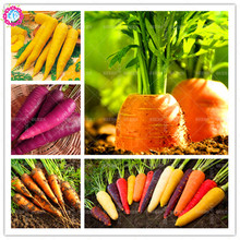Low price!100 pcs/bag rare rainbow carrot seeds colorful Non-GMO organic fruit vegetable plant bonsai seeds for home garden(China)