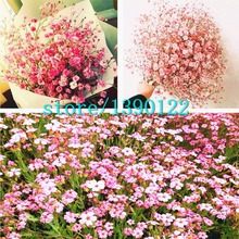 100pcs Mixed color starry(gypsophila paniculata) seeds,mantianxing seeds,bonsai flower seeds Natural plant for home garden