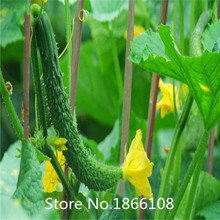 home & garden 100New Home Garden Plant  Seeds PEPINO AFRICANO Kiwano Melon Cucumis Metuliferus African Horned Cucumber Fruit See