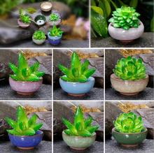 1 piece (7x7x3cm please look at the size, very cute little more meat pots ) Binglie ceramic pots colorful mini fleshy pots