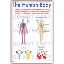 Human Science Human Body Organs Medical Knowledge Silk Poster Printing, Custom Wallpaper Decorated HospitalQT111(China)