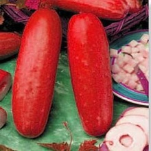 free ship  red cucumber seeds Fruit Vegetables Seeds  flower pots planters 20 seeds