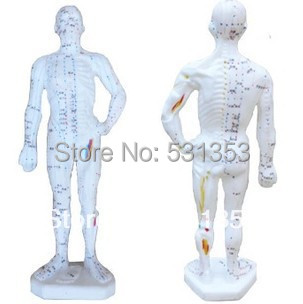 Acupuncture meridian points of the body people die acupuncture teaching model<br>