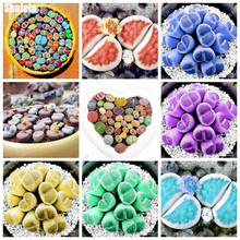 Living Stone Lithops Fleshy Ass Flower Cactus Seeds Diy Home Garden Household Purify The Air Absorb Harmful Gases 100 Pcs