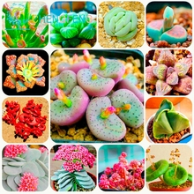 300/bag Mix Succulent Seeds Lotus Lithops Pseudotruncatella Bonsai Plants Seeds For Home & Garden Flower Pots Planters Sementes(China)