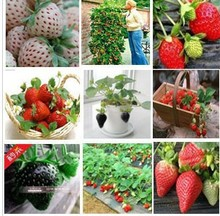 1200pcs/24 kinds strawberries seeds white black red yellow green blue pink orange purple strawberry home plants Free shipping