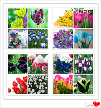 10PC imported tulip bulbs / 25 colors of 100% sprouted flowers (it is not a tulip seed)/premium bonsai