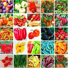 200pcs/bag Rainbow Chili peppers seeds  Multi color Pepper seeds Interest Mini Home Garden plant pot bonsai